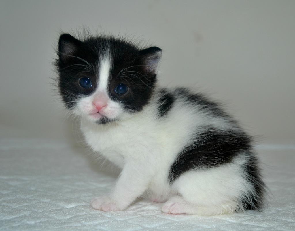 SOS για 3 μικρά γατάκια!!! SOS SOS SOS DSC_0009_zpscrl1xgzt