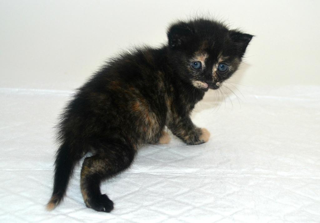 SOS για 3 μικρά γατάκια!!! SOS SOS SOS DSC_0010_zpsmx8n1qvz