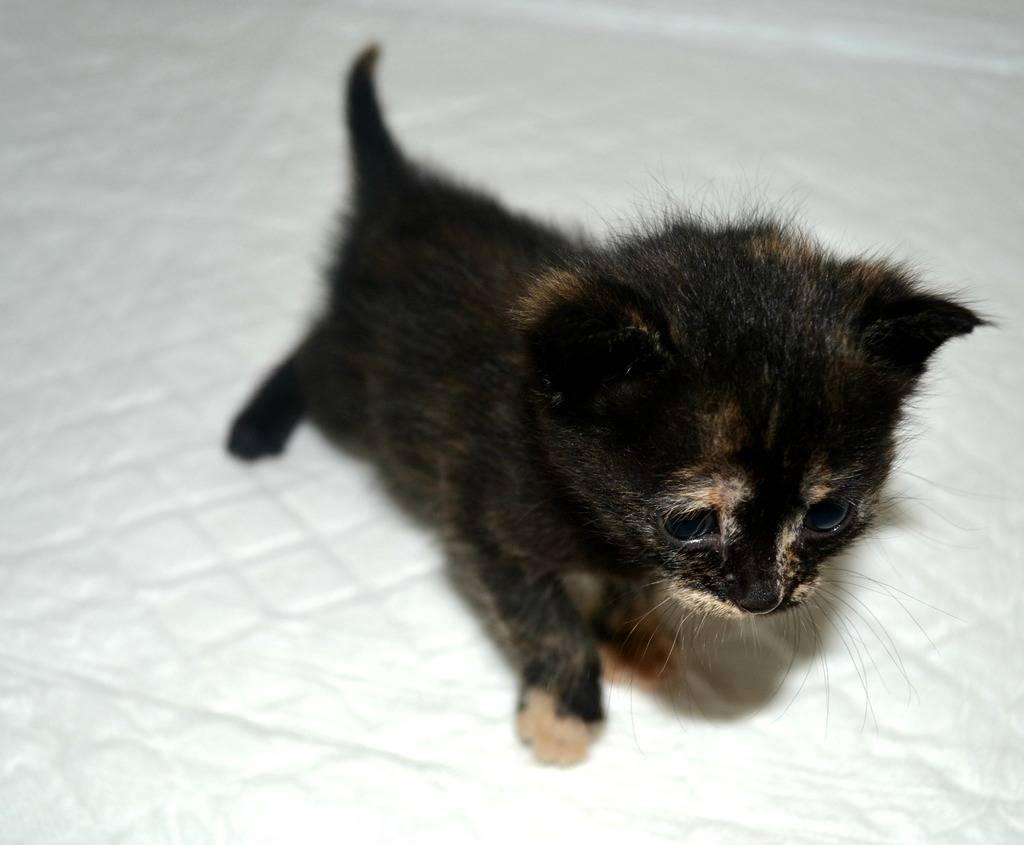 SOS για 3 μικρά γατάκια!!! SOS SOS SOS DSC_0014_zpseuxbkfmr