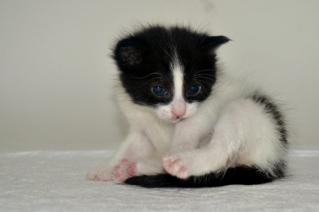 SOS για 3 μικρά γατάκια!!! SOS SOS SOS DSC_0017_zpsmu3d94c6