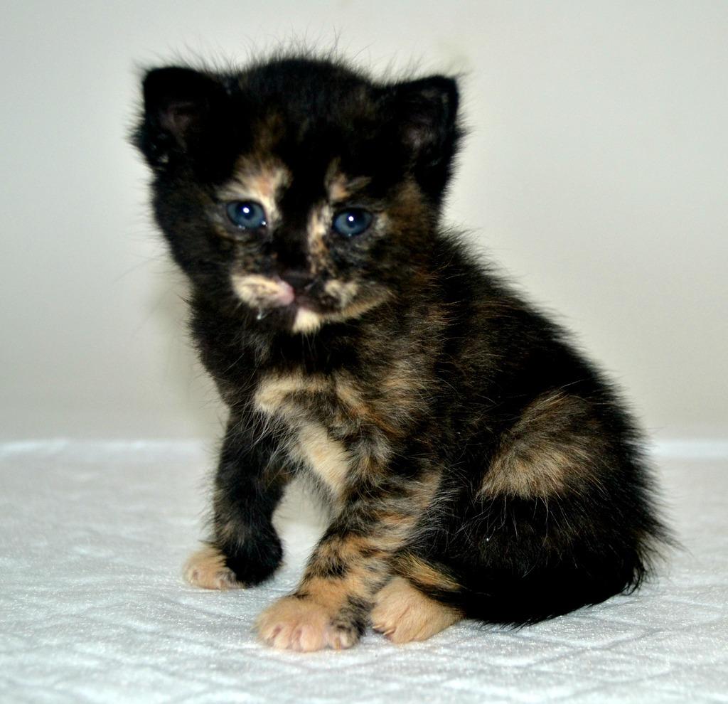 SOS για 3 μικρά γατάκια!!! SOS SOS SOS DSC_0018%202_zpshrt9ls06