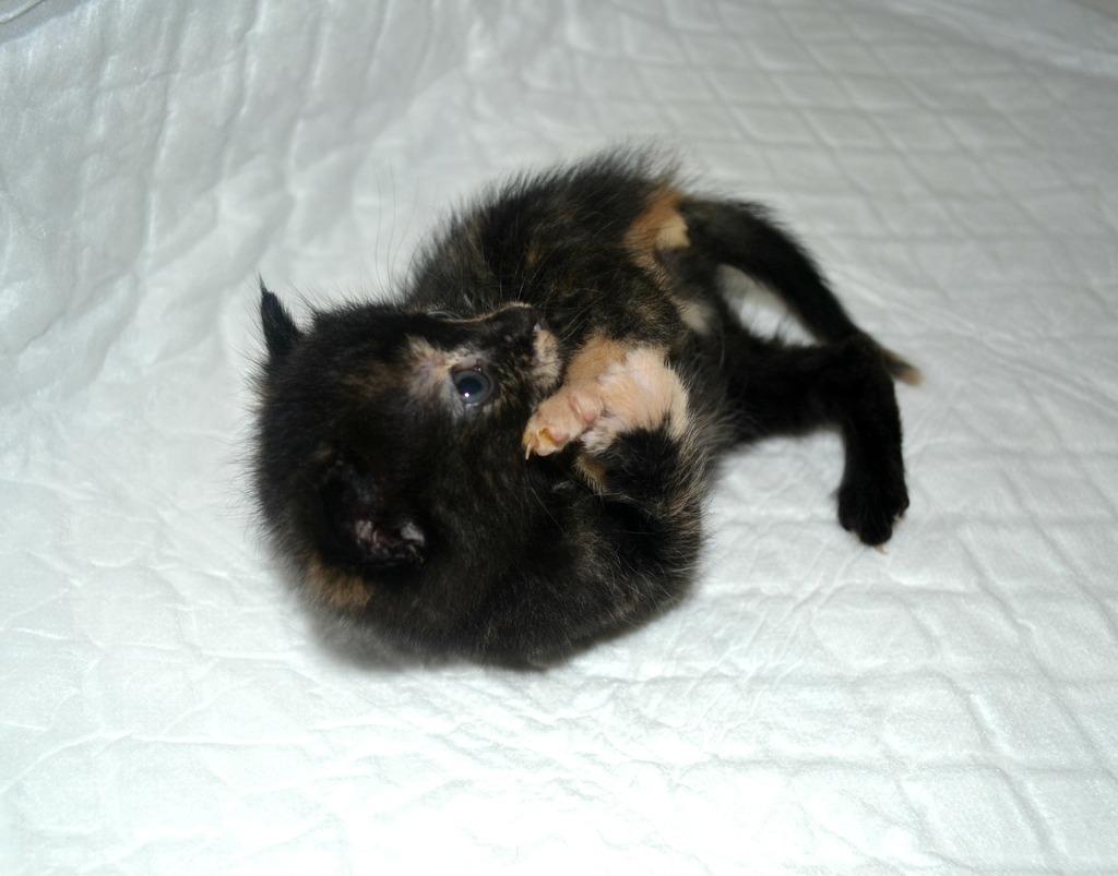 SOS για 3 μικρά γατάκια!!! SOS SOS SOS DSC_0018_zpsofspfcet