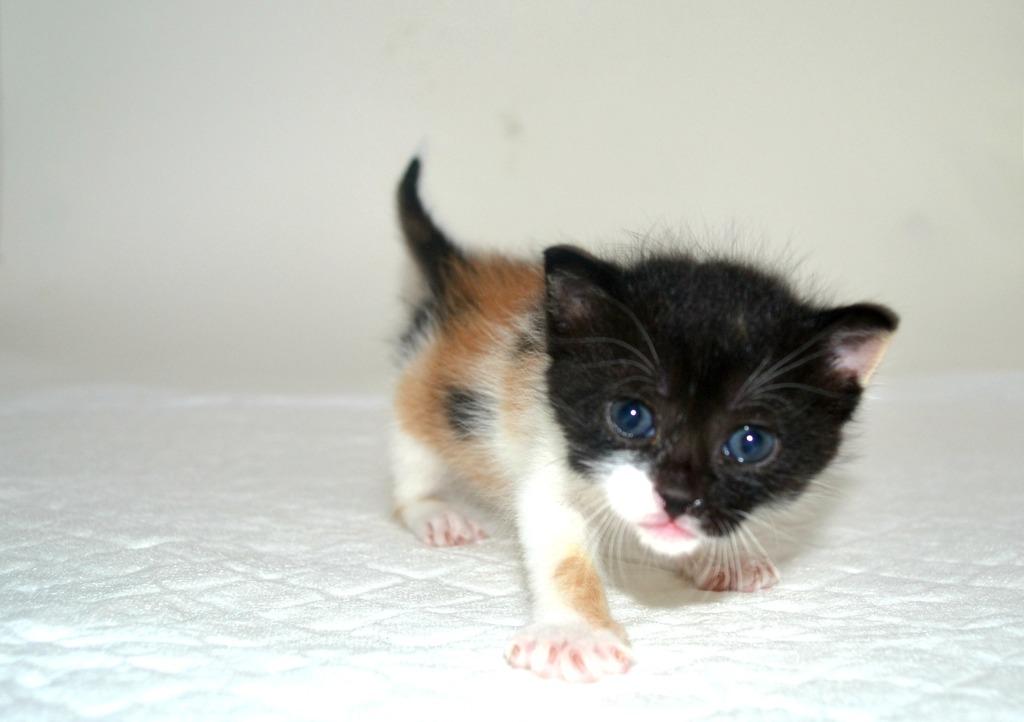 SOS για 3 μικρά γατάκια!!! SOS SOS SOS DSC_0022_zpssfurw7up