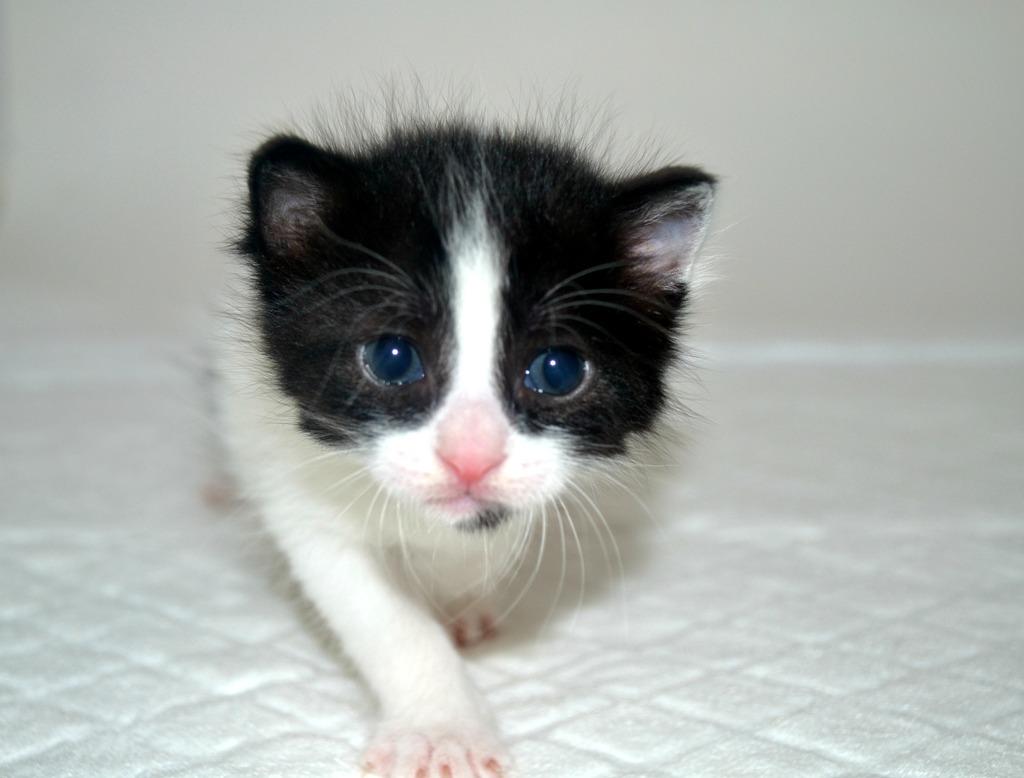 SOS για 3 μικρά γατάκια!!! SOS SOS SOS DSC_0029_zpsxdm8egnj