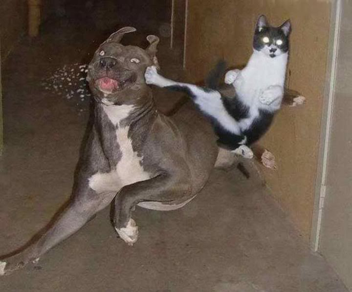 Random picture thread - Page 3 Kungfucat