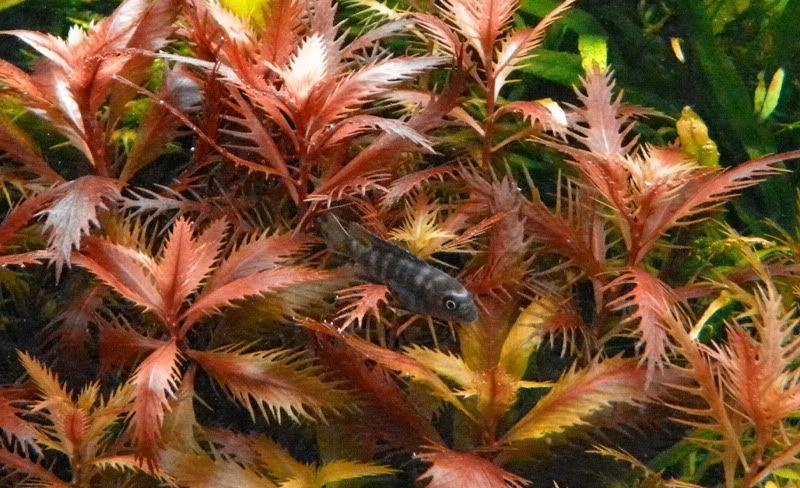 el acuario de los mpanga DSCN8149-800x600
