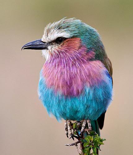 حديقة حيوانات المركز الدولى  - صفحة 2 Beautiful-birds-10