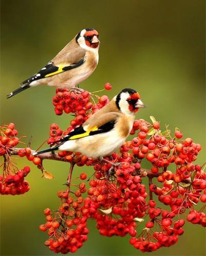 حديقة حيوانات المركز الدولى  - صفحة 2 Beautiful-birds-3
