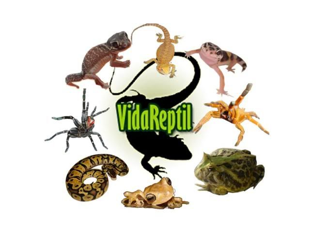 Vida Reptil Reload