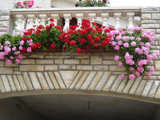 Cvijeće oko kuće  - Page 2 Proljetnibalkon2