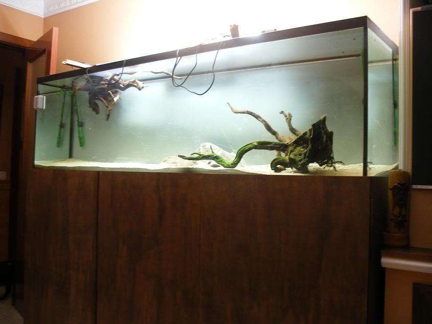 mi nuevo acuario Nuevoacuario