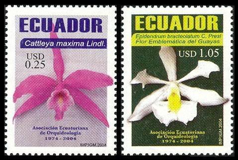Orchideen ECUADOR_2004ORCHIDS_01
