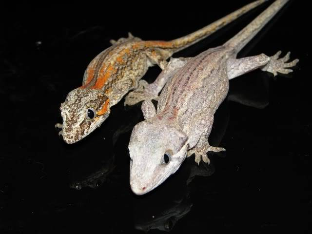 Reptiles, my other hobby. IMG_3044