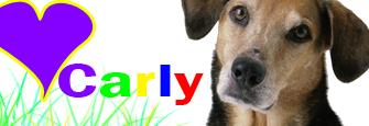 Carly's New Signature Dog