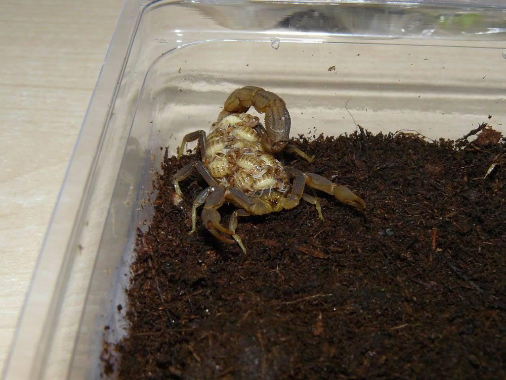 My scorpion collection P1080822