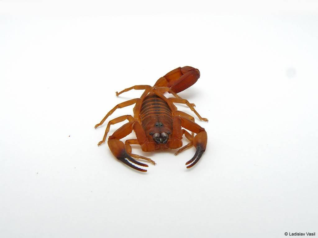 My scorpion collection P1090828