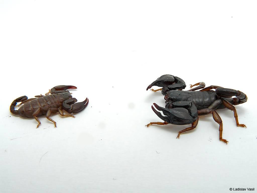 My scorpion collection P1090964kopie
