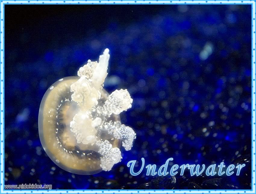 1 دعاء وصور لمخلوقات الله الرائعة Slide1-1