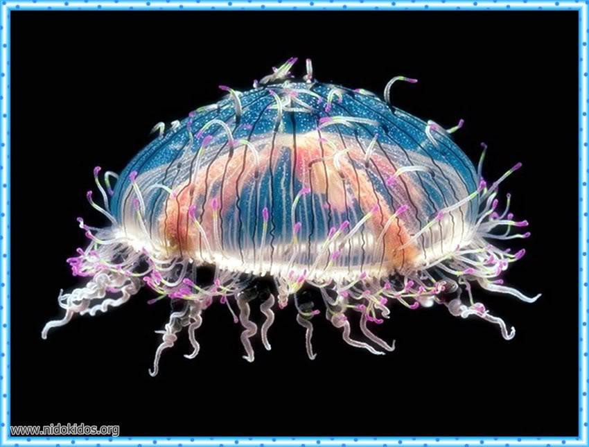 1 دعاء وصور لمخلوقات الله الرائعة Slide26