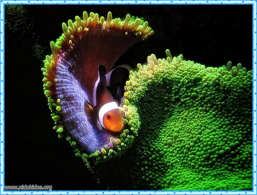 1 دعاء وصور لمخلوقات الله الرائعة Slide30