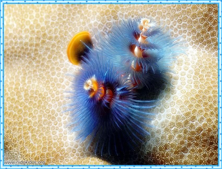 1 دعاء وصور لمخلوقات الله الرائعة Slide33
