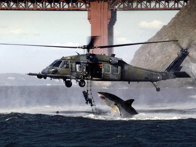 3...2....1, RAPED!! Shark_attack
