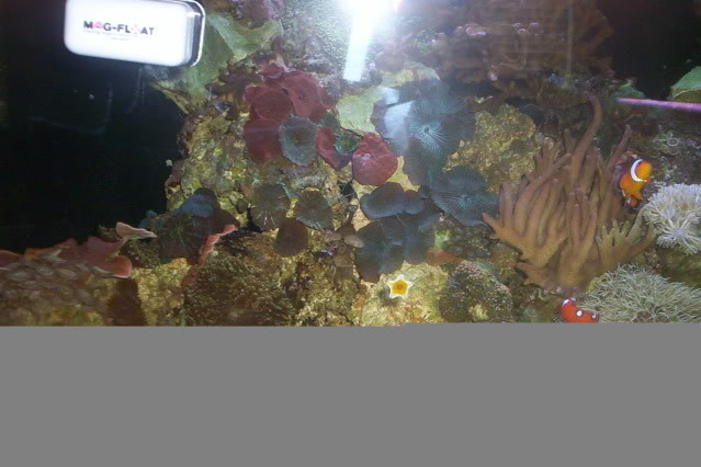 My Reef Picture001-1