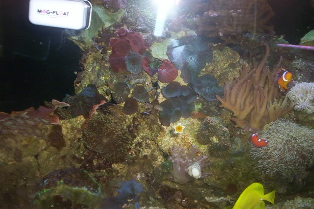 My Reef Picture002-1
