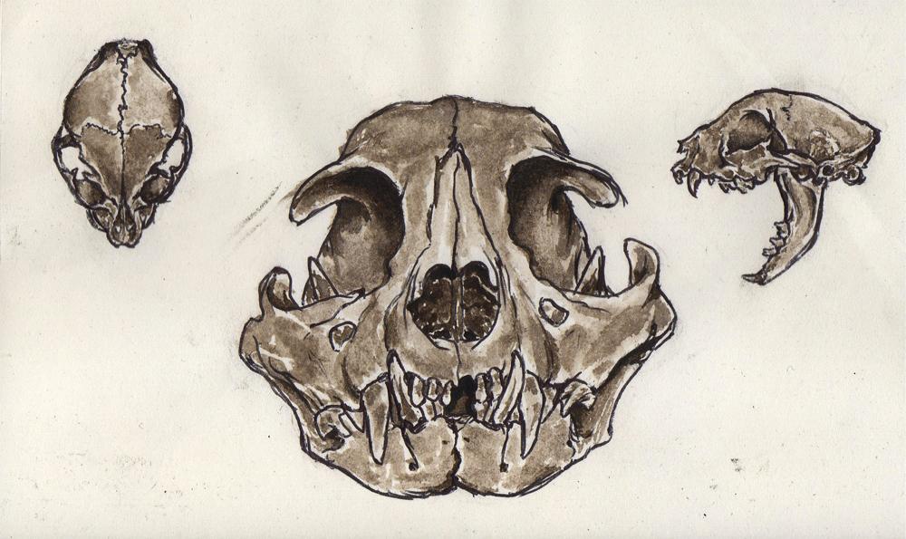 [ Galeria ] Morte Gato_skull-menor