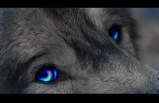 Fifty Shades of Blue Wolf_eyes_by_wolfje16
