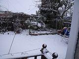 November Snow Th_DSCF0473