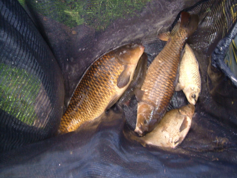 4th bye , bonehill mill fishery, 23/06/12 3drbyebonehill2362012003
