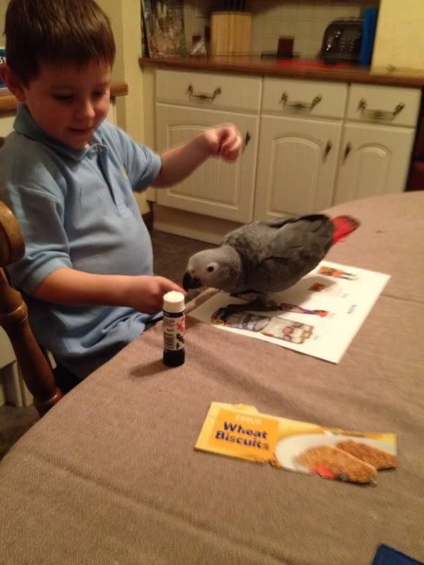 Oliver's homework buddy 1d8b6441