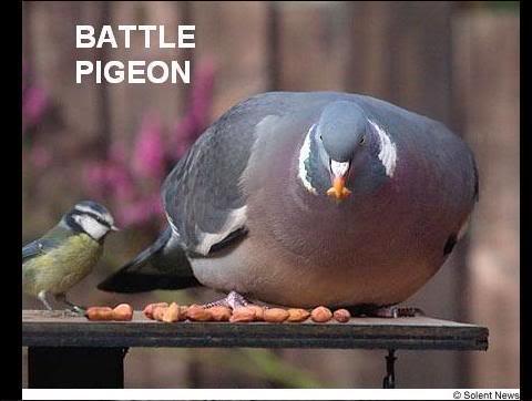 :: Quotes Épicos OdD :: Battlepidgeon