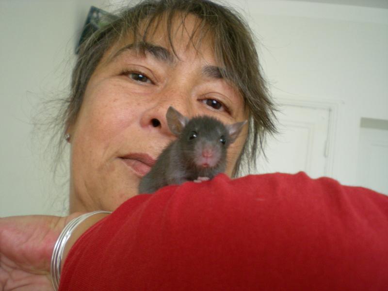 Bébé rattus rattus orphelin  - Page 5 112_1