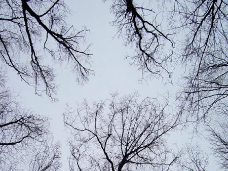 Images de mathématiques Bestfractal_trees