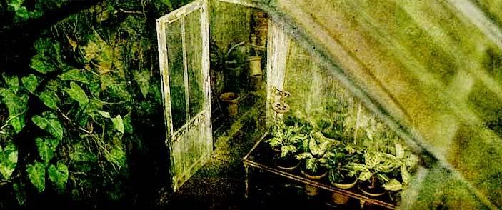 Cours théorique n°2 Le Mimbulus Mimbletonia [5ème, 4ème, 3ème année] HerbologyGreenhouse
