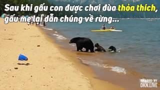 Khi mẹ con nhà gấu đi tắm biển Mqdefault