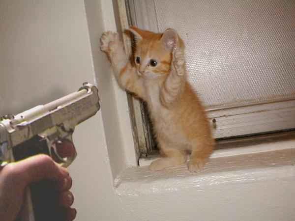 Funny Cat Pics! DieCatDie