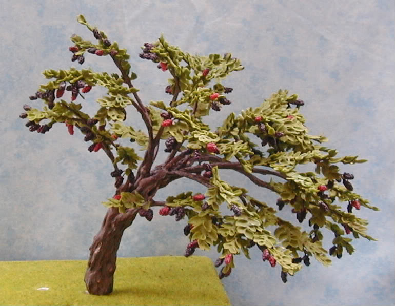 Black Mulberry Bush 1044