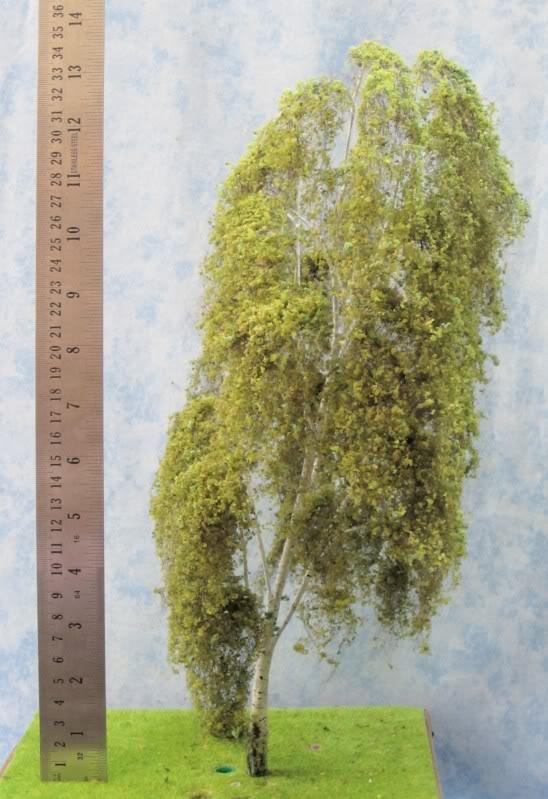 Model tree,silver birch