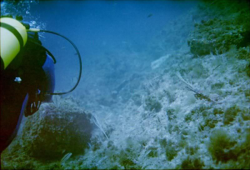 MARINE - Débuter en photo sous-marine : vos conseils Cassis_i_005