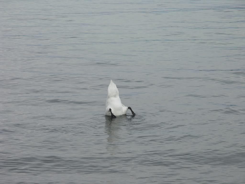 Rubrique plongée : venez comme vous êtes ! PICT0115