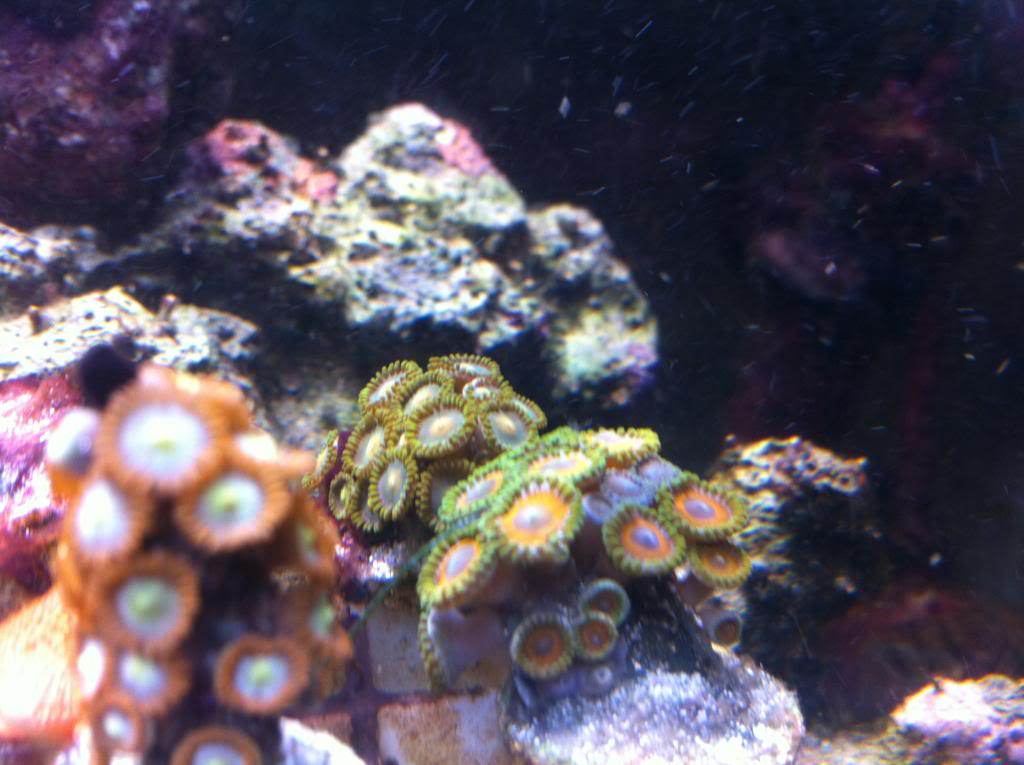 20 mixed reef (PIC HEAVY) Photo36-1