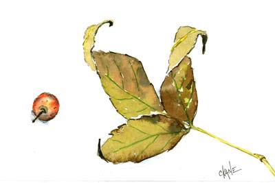 ¡Concurso! Flora de Dust 20090924_autumn_leaves_berry