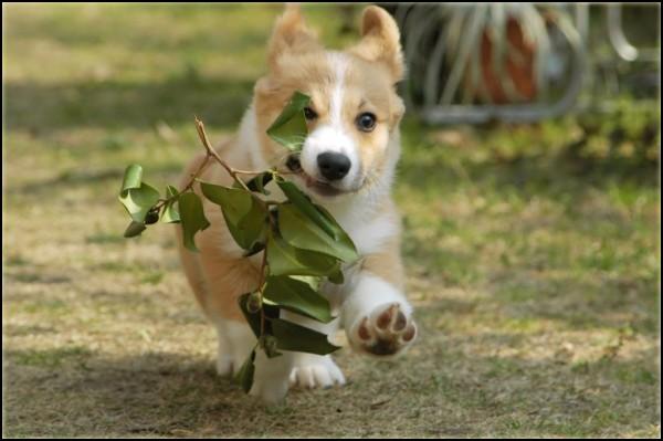 ✄ Demande de cadre. PuppyKingOK
