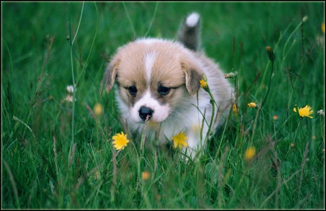 ✄ Demande de cadre. PuppyKooperOK