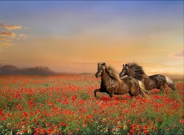 Konji B_h48719