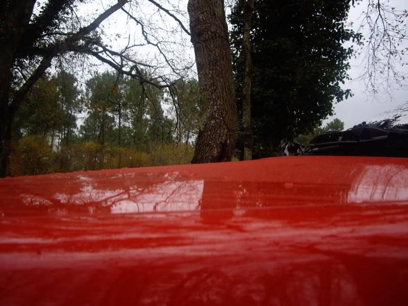 Daredevil dans les bois...23-11-08 IMGP8202