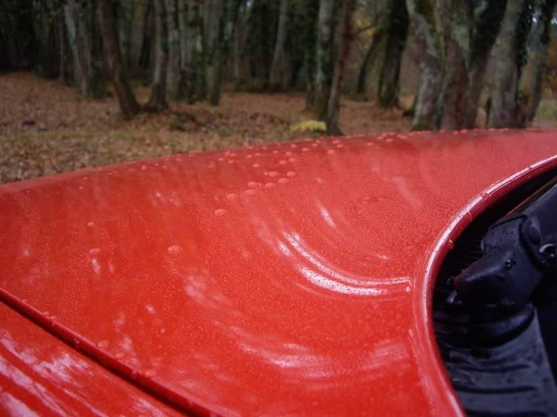 Daredevil dans les bois...23-11-08 IMGP8216